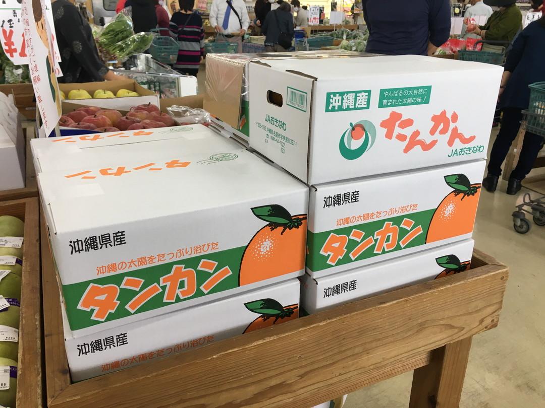 【今シーズン注文終了】冬の沖縄の味覚「タンカン」。沖縄の陽射しを浴びたビタミンC豊富な沖縄ミカンを味わって。